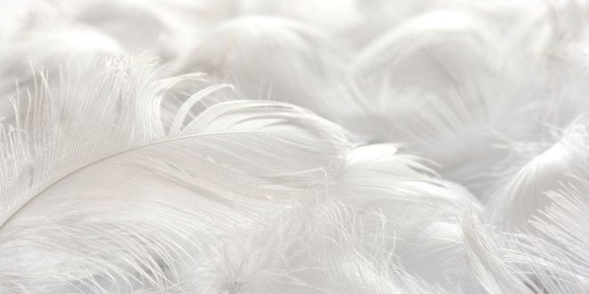 Kissen- und Bettdeckenmaterialien